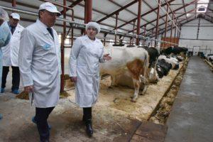 Должностная инструкция оператора животноводческого комплекса (механизированной фермы), занятого на обслуживании крупного рогатого скота (скотника), 5-го разряда